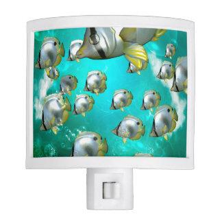 Underwater world, Wonderful butterflyfish Night Lights