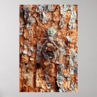 Une araignée camouflée d'écorce poster