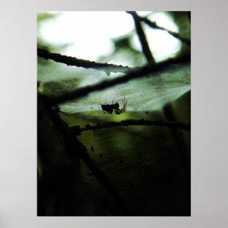 une araignée dans les ombres posters