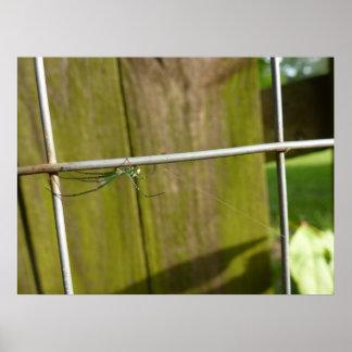 Une araignée sur la barrière affiches