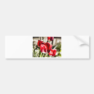 Une belle tulipe autocollant de voiture