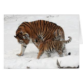 Une famille de tigre carte de vœux