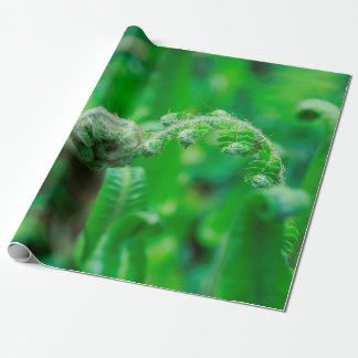 Unfurling Ferns Wrapping Paper