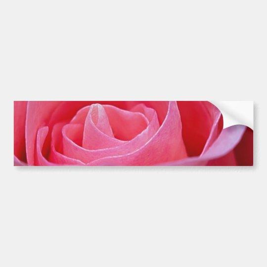 Unfurling Pink Rose Bumper Sticker
