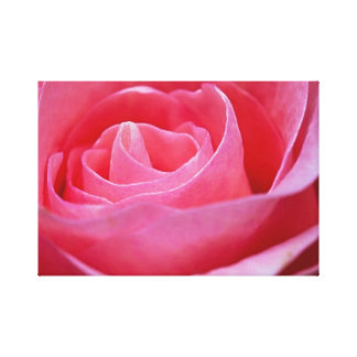 Unfurling Pink Rose Canvas Print