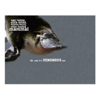 Unique Duckbill Platypus Postcard