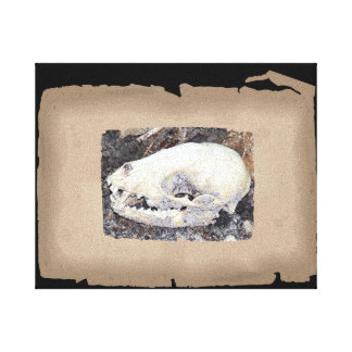 Unique sepia raccoon skull canvas print