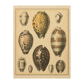 Uniquely Shaped Seashells Wood Wall Art