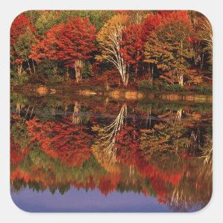 United States, Michigan, Upper Peninsula. Fall Square Sticker