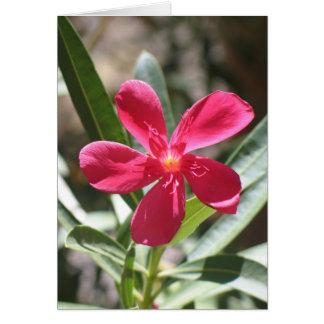 Unknown flower, Death Valley Card