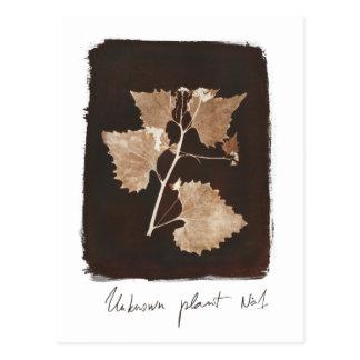 unknown_plant_Nr.1 Postcard