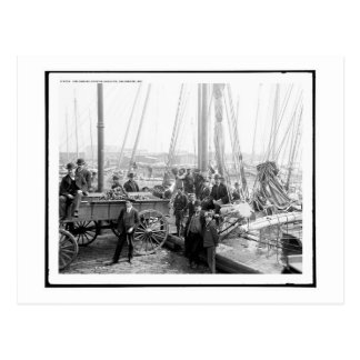 Unloading Oyster Luggers, Baltimore, MD Vintage Postcard