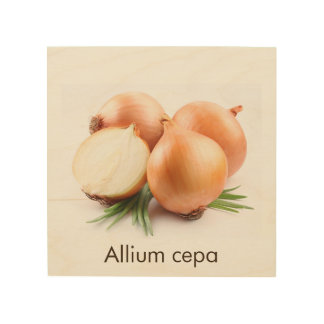 unpeeled onions wood kitchen art