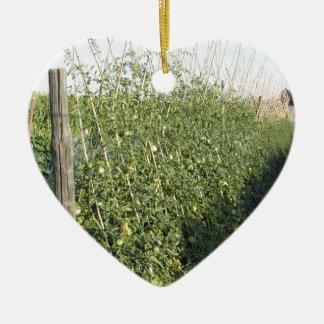 Unripe green tomatoes in the garden ceramic heart ornament