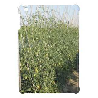 Unripe green tomatoes in the garden iPad mini covers