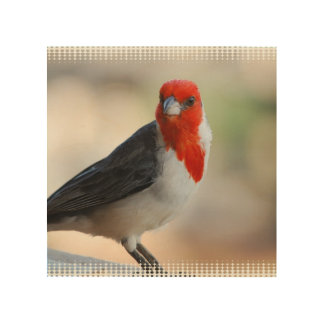 Unusual Cardinal Wood Canvases