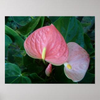 Unusual Flora Poster