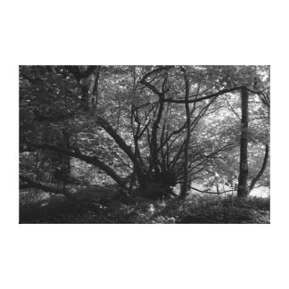 Unusual Tree Bute Park Cardiff Wales BW Canvas Prints