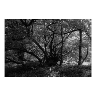 Unusual Tree, Bute Park, Cardiff, Wales BW Poster
