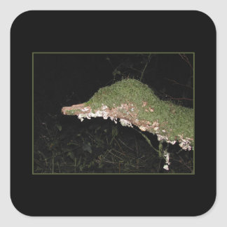 Unusual Vegetation in the Woods. Square Sticker