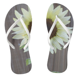 unusual white sunflower against a weathered fence flip flops