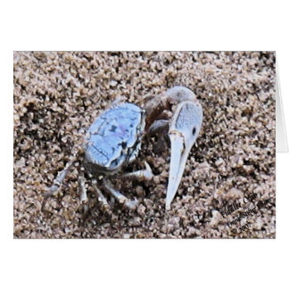 Up Close and Dirty ! Fiddler Crab Card