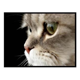 Up-Close Kitty Post Card