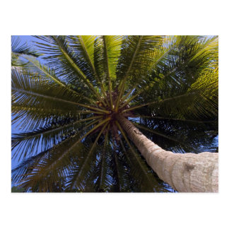 up the coconut tree postcard