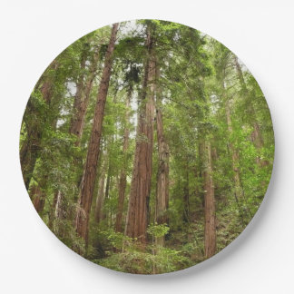 Up to Redwoods at Muir Woods National Monument Paper Plate