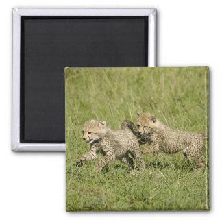 Upper Mara, Masai Mara Game Reserve, Square Magnet