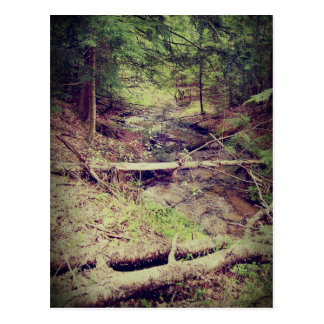 Upper Peninsula Creek Postcard