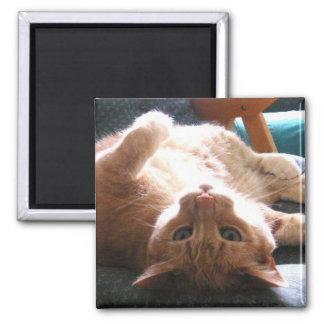 Upside Down Cat Magnet