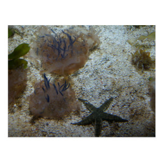 Upside-down Jellyfish Postcard