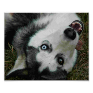 UpsideDown Husky Poster