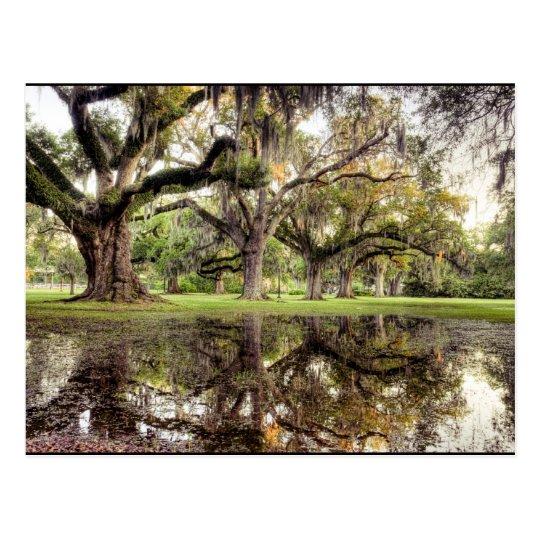 Uptown New Orleans Rain Postcard