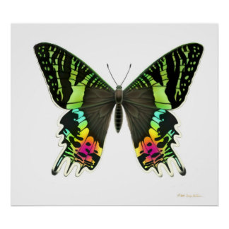 Urania Sunset Moth Poster