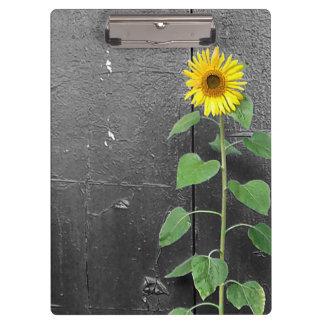 Urban Sunflower Clipboards