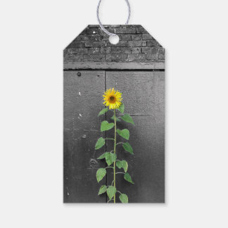 Urban Sunflower Pack Of Gift Tags