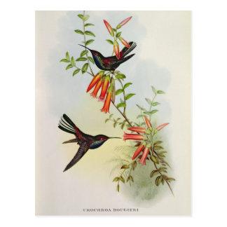 Urochroa Bougieri Postcard