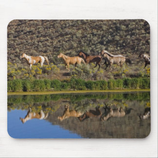 US, Oregon, Seneca, Ranch living at The 2 Mouse Pad