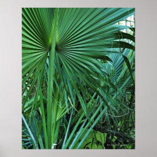 US Virgin Islands, St. Thomas, Tropical leaves Poster
