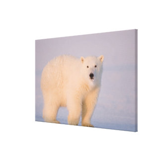 USA, Alaska, 1002 Coastal Plain of the Arctic 2 Stretched Canvas Print