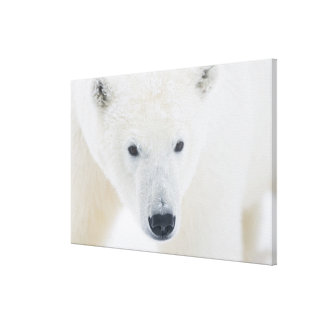 USA, Alaska, 1002 Coastal Plain of the Arctic 3 Stretched Canvas Prints