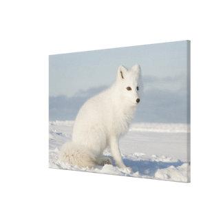 USA, Alaska, 1002 Coastal Plain of the Arctic 4 Canvas Print