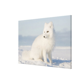 USA, Alaska, 1002 Coastal Plain of the Arctic 5 Gallery Wrap Canvas