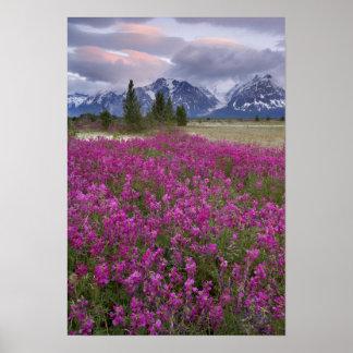 USA, Alaska, Alsek River Valley. View of Poster