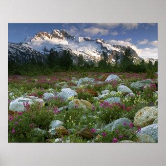 USA, Alaska, Alsek-Tatshenshini Wilderness. View Poster