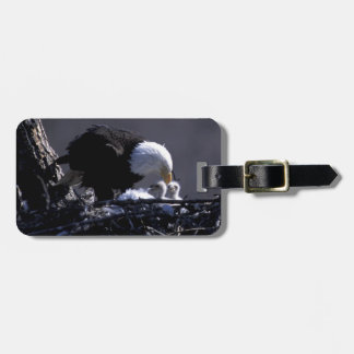 USA, Alaska, American bald eagle at nest with 2 Luggage Tag