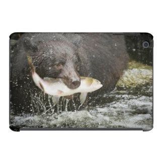 USA, Alaska, Anan Creek. Close-Up Of Black Bear iPad Mini Retina Covers