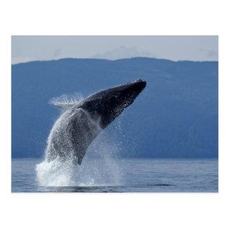 USA, Alaska, Angoon, Humpback Whale (Megaptera Postcard